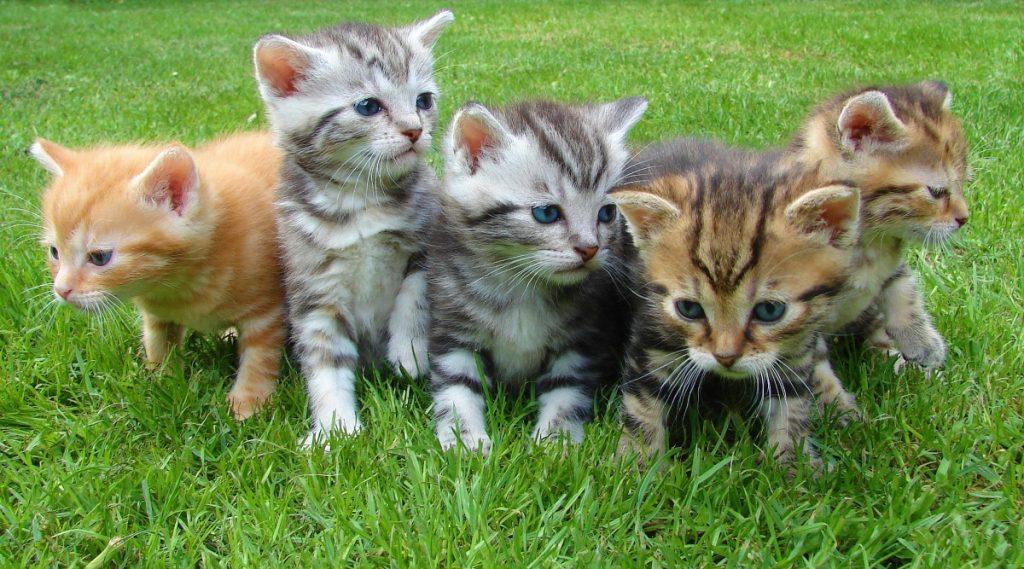 Kittens, https://pixabay.com/users/jan-mallander-615621/